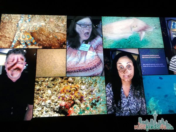Monterey Aquarium Tentacles Exhibit - Interactive Activies for Everyone