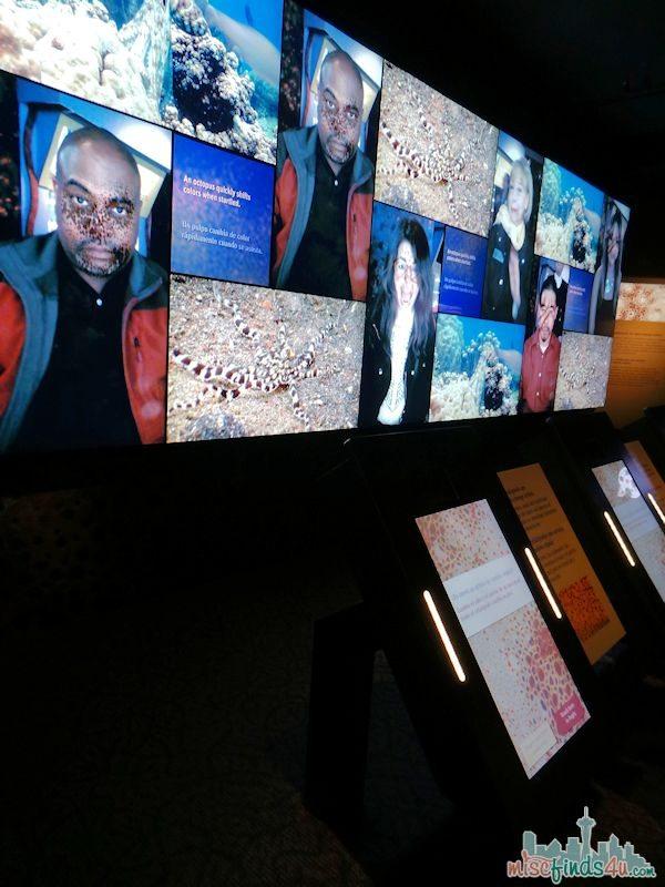 Monterey Aquarium Tentacles Exhibit - Interactive Activities