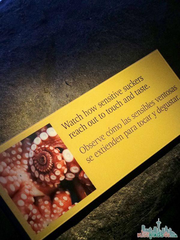 Monterey Aquarium Tentacles Exhibit - Octopus Tank Description
