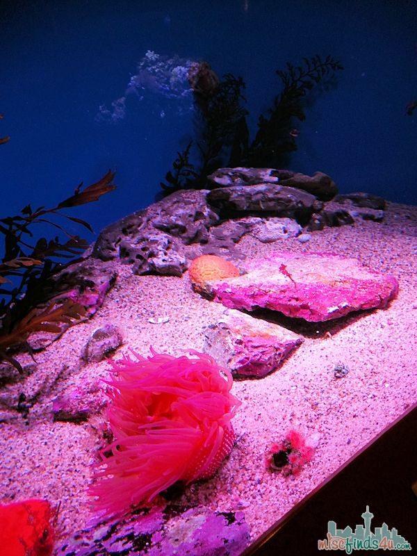 Monterey Aquarium Tentacles Exhibit - Red Octopus Tank