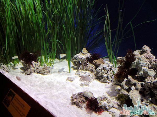 Monterey Aquarium Tentacles Exhibit - cuttlefish tank
