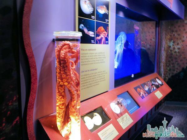 Monterey Aquarium Tentacles Exhibit - interactive technology exhibits