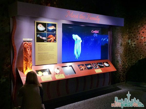 Monterey Aquarium Tentacles Exhibit - meet the family
