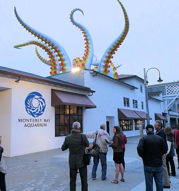 Tentacles Monterey Bay Aquarium New Exhibit Overview