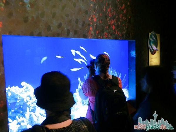 Monterey Aquarium Tentacles Exhibits