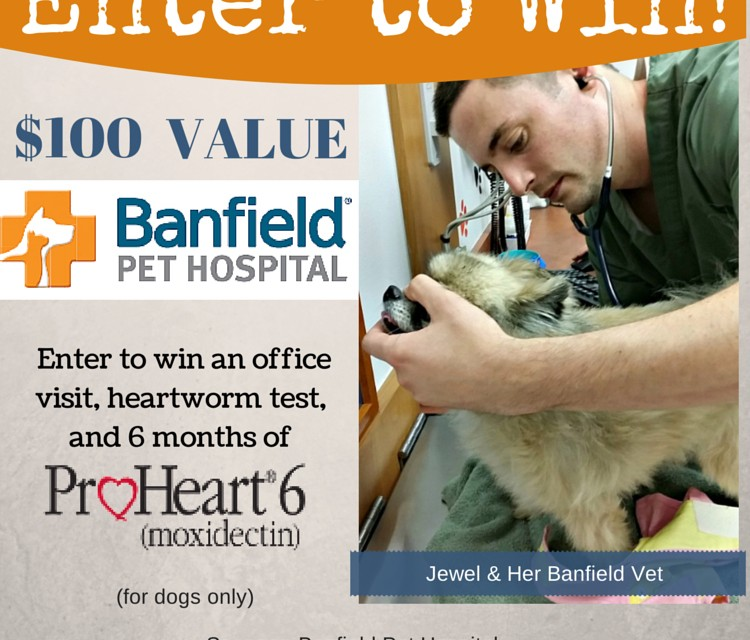 Banfield Pet Hospital Heartworm Prevention #Giveaway $100 value @Banfield