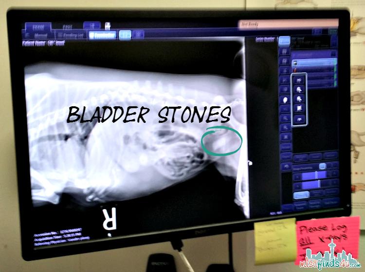 Jewels Bladder Scan