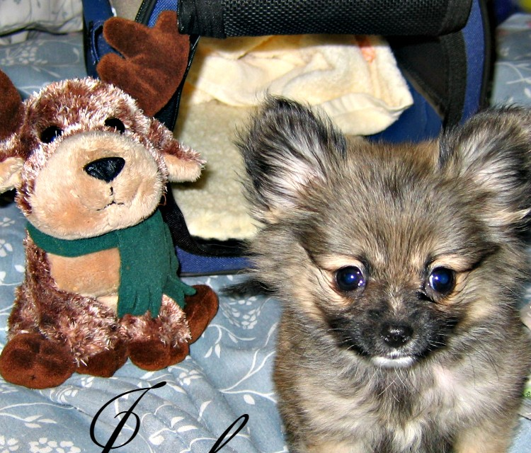 Banfield Wellness Plan and Heartworm Prevention – Keeping My Pom Healthy