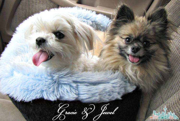 My Pomeranian and Maltese