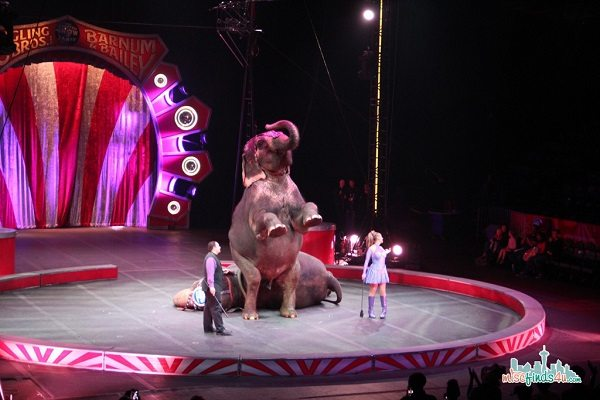 Elephants at Ringling Bros and Barnum & Bailey Circus - Things To Do With Kids In Seattle: Go To The Circus #Seattle  ad