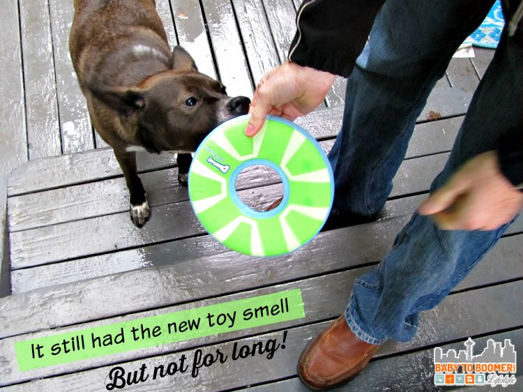 Chuckit Dog Toy Test - Chuckit Zipflight and Tumble Bumble vs Our Dogs #Giveaway Ad
