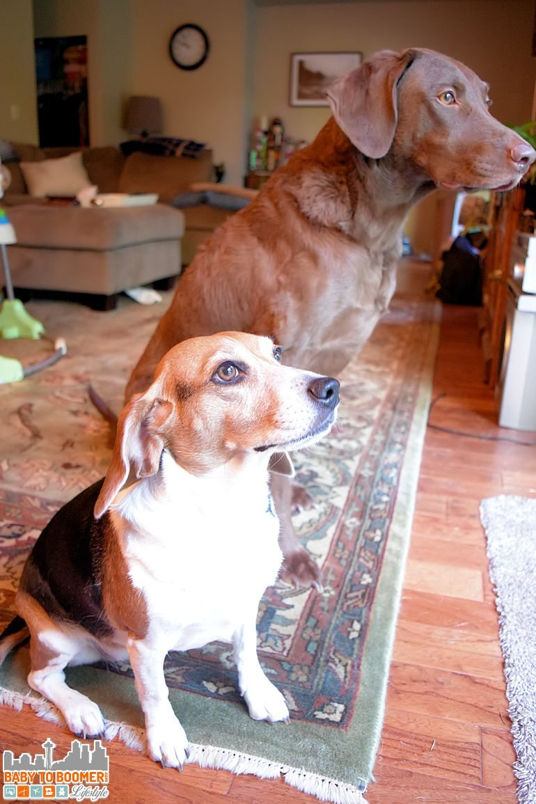 Evanger's Food for Dogs and Cats - Grain Free Jerky Treats Sponsored