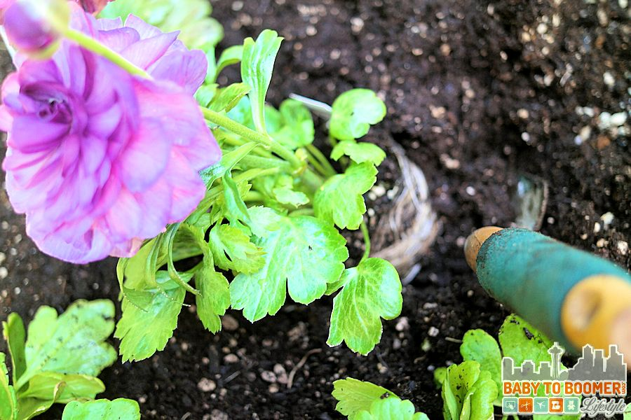 Creating a deck garden for cutting flowers means I can have flowers in my home all summer long! - ad