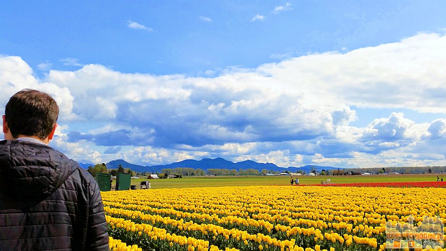 Skagit Valley Tulip Festival taken without the Smart iReach™ Selfie Stick  #ad