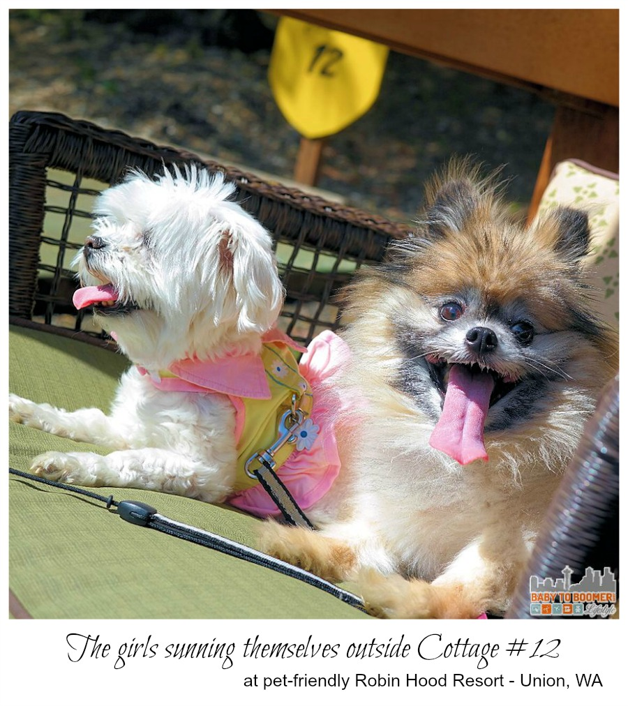 Pet Friendly Resort in Washington - Robin Hood Resort - #MyGrouponGetaway ad