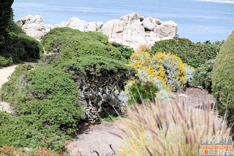 Monterey Bay Inn - Sanctuary