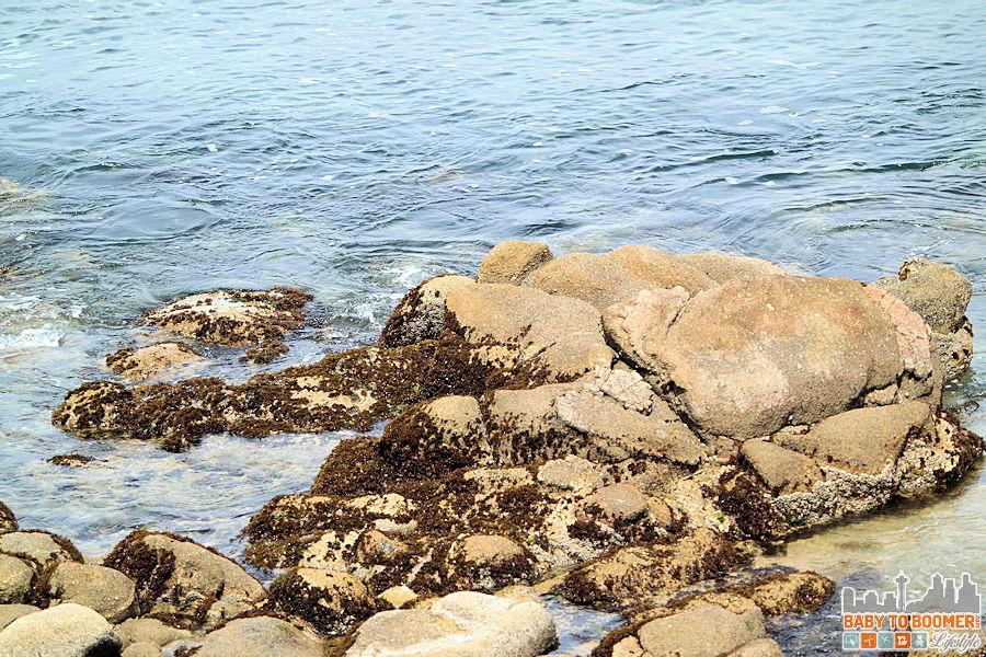 Monterey Bay Inn - ocean