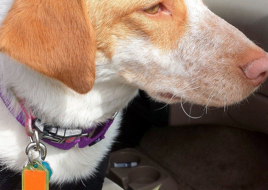 Purina® Pro Plan® BRIGHT MIND Trial – An Update on Ellie