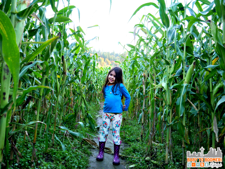Halloween Corn Maze - Panasonic Lumix G7: I'm Ready to Capture the Holidays! #4KPhoto #4KFun #IC #ad