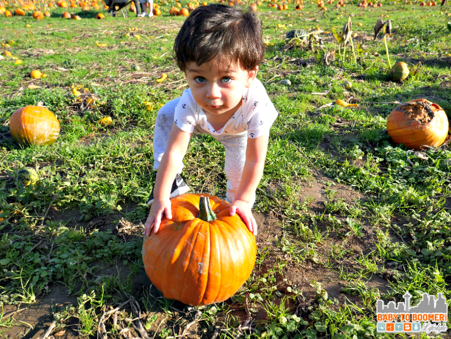 Halloween Pumpkin Patch - Panasonic Lumix G7: I'm Ready to Capture the Holidays! #4KPhoto #4KFun #IC #ad