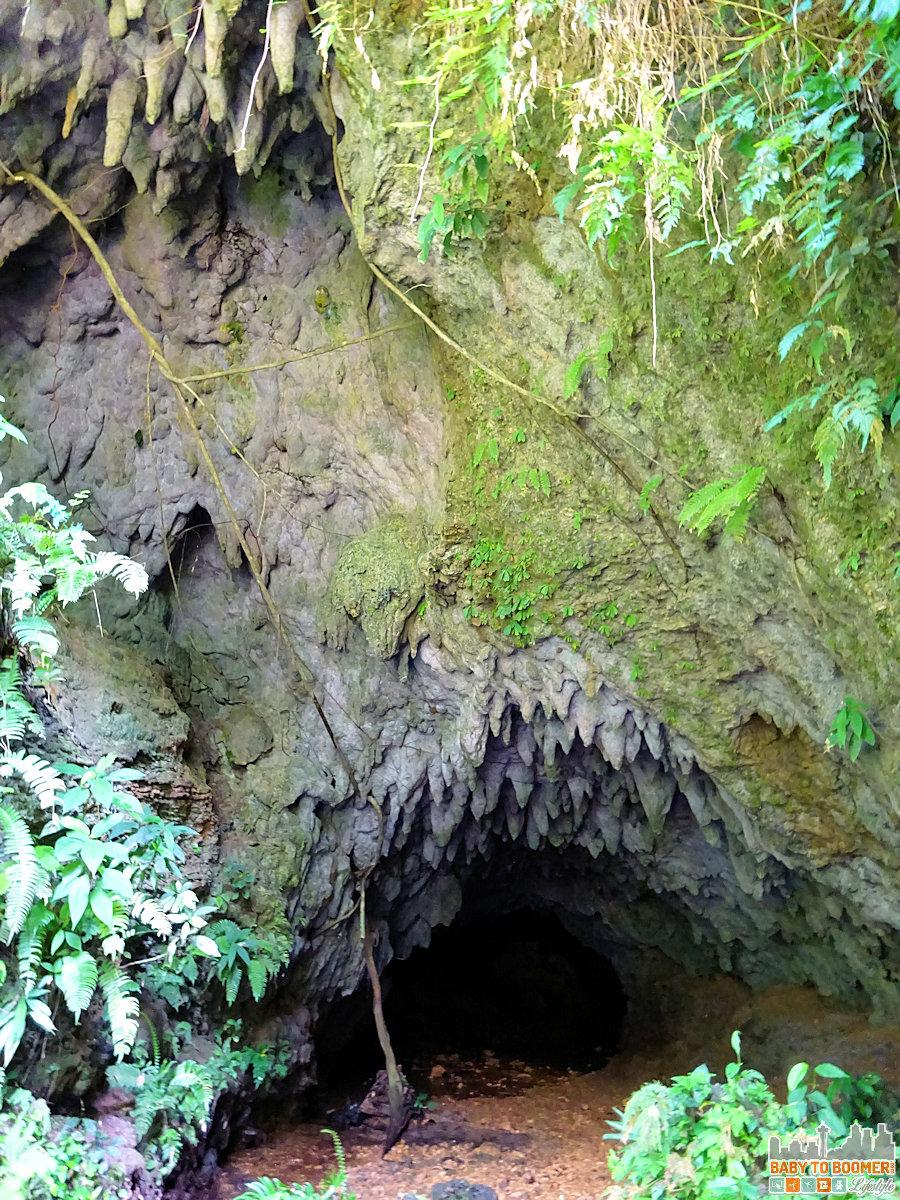La Gruta Cave Panama - Bats