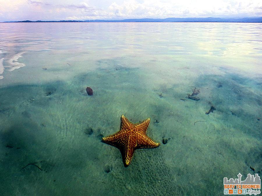 Panama - Bocas Del Toro - Playa Estrella Starfish