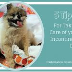 5 Tips For Taking Care of an Incontinent Dog: Practical Parenting Advice – Giveaway! #PetcoDelivers