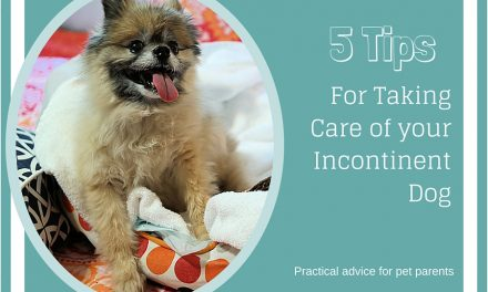 5 Tips For Taking Care of an Incontinent Dog: Practical Advice for Pet Parents