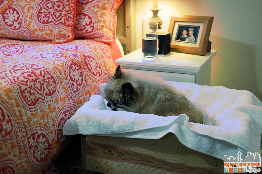 DIY Pet Bed - Raised -