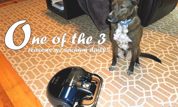 Samsung POWERbot Wi-Fi Robot Vacuum Vs Our Pets @BestBuy  @Samsungtweets  #bbysamsung