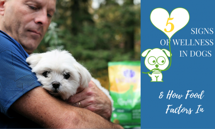 Five Signs of Wellness in Dogs & How Food Factors In