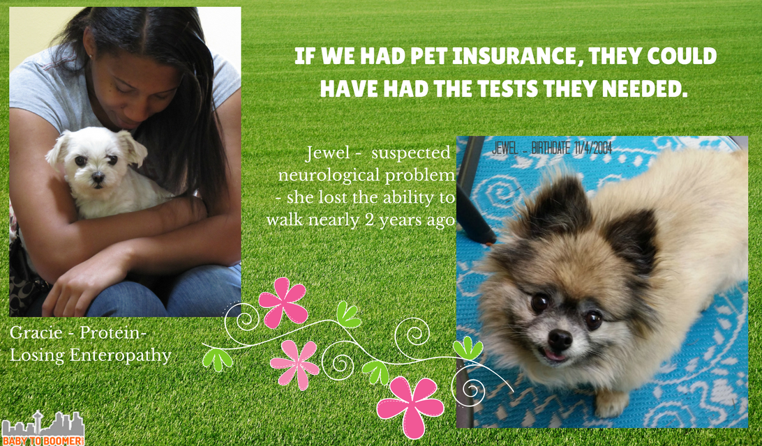 Healthy Paws Pet Insurance - Coverage for Accidents, Illness, & More! #ad