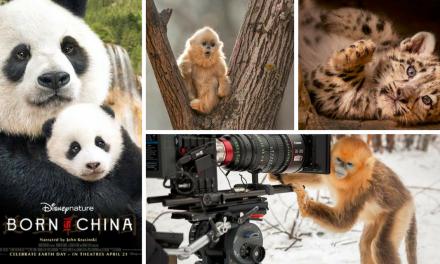 Disneynature BORN IN CHINA Opens Earth Day 2017 + Free Printables!#BornInChina
