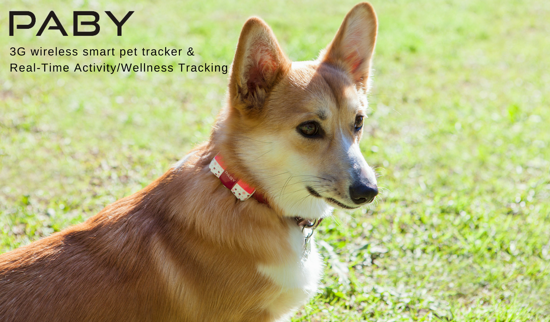 Paby Smart Pet Location and Activity Tracker for Dogs, Cats & More