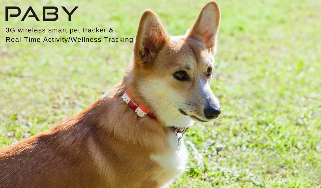 Paby Smart Pet Location and Activity Tracker: Tracks Location & Wellness- Pet 3G Wireless Wellness Tracker