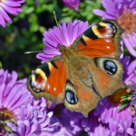 How To Attract Butterflies to Your Garden Naturally